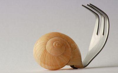 La chiocciola è l'alimento perfetto? La scienza risponde.